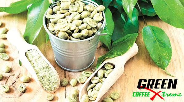 benefícios green coffee xtreme